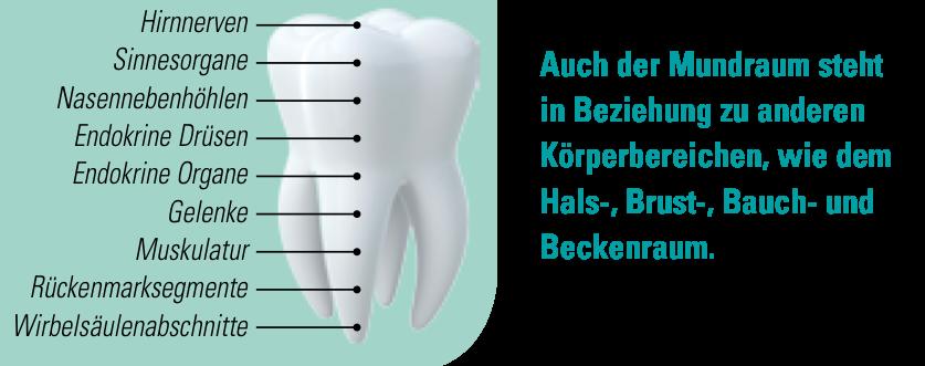 ganzheitliche Zahnheilkunde Dr. Heike Kretschmar - Störherdzahn